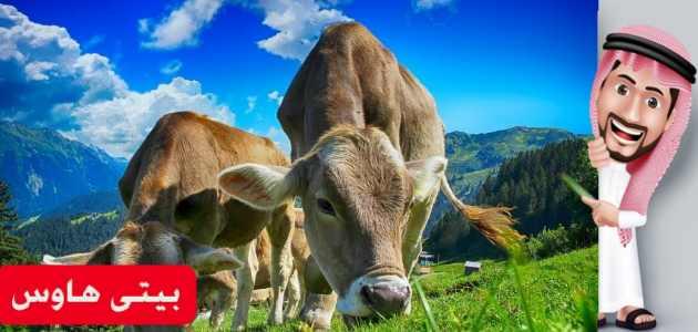 موعد صرف اعانة مربي الماشية