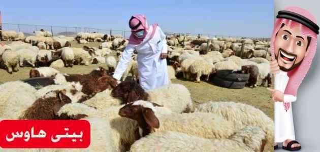 شروط التسجيل في برنامج دعم صغار مربي الماشية