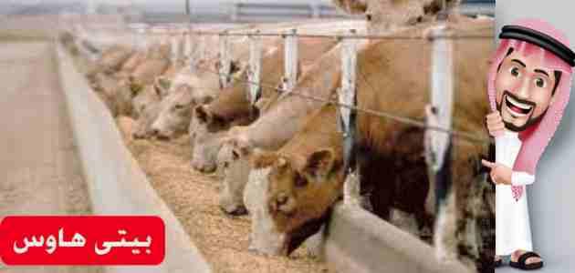 طريقة التسجيل في برنامج دعم صغار مربي الماشية